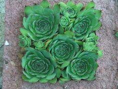 DIY Hypertufa Planter Instructions Square