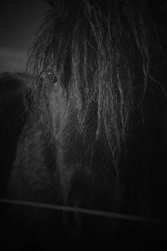 Pony b/w by gita Wilke on 500px