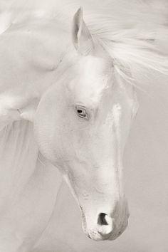 White horse, white eyes.