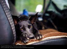 Foto 'Reisen mit Hund' von '50Centimos'
