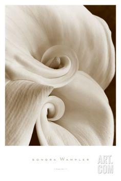Fleur No. 1 Art Print by Sondra Wampler at Art.com