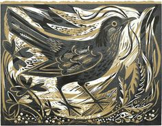 MARK HEARLD  Ballindalloch Blackbird