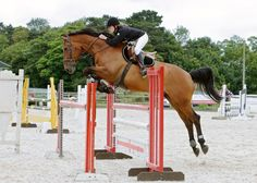 This 16.3hh fourteen-year-old bay #gelding could be the #showjumper for you | For sale on #HorseDeals
