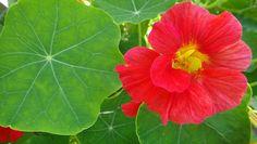 kleurijke en natuurlijke fertilizers en pesticides.