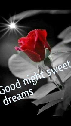 Good Night Sweetheart, Good Night Flowers, Good Night Greetings, Good Night Sweet Dreams, Blessings, Blessed, Drawings, Movie Posters, Film Poster