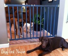 DIY dog gate from extra tall baby gate Diy Dog Gate, Diy Dog Bed, Pet Gate, Doggie Beds, Gate 2, Baby Dogs, Pet Dogs, Baby Gates, Dog Gates