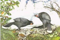 HUIA by Rei Hamon, NZ New Zealand Art, Border Design, Art Gallery, Birds, Nature, Painting, Animals, Small Office, Color