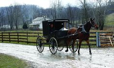 Old Amish Horse and Buggy | An Amish buggy is shown being driven down the road between Amish farms ...