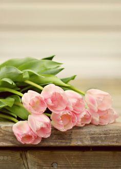 Pink Tulips ☾♡ ♥ ♫ La-la-la Bonne vie ♪ ♥❀ ♢♦ ♡ ❊ ** Have a Nice Day! ** ❊ ღ‿ ❀♥ ~ Mon 25th May 2015 ~ ❤♡༻ ☆༺❀ .•` ✿⊱ ♡༻ ღ☀ᴀ ρᴇᴀcᴇғυʟ ρᴀʀᴀᴅısᴇ¸.•` ✿⊱╮ ♡ ❊ **
