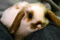 I really, really want to buy a bunny.