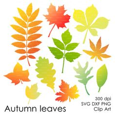 Leaves Vector Digital Cut File (eps, svg, dxf, ai, jpg, png) cutting silhouette svg file Autumn Leaf Fall Wall Art Print EasyPrintPD