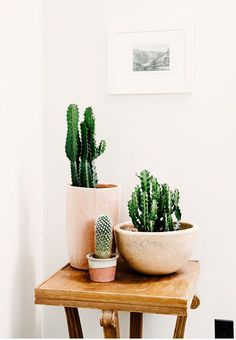 Cactuses is a very modern plant group. They can give your interior a cool, Californian atmosphere. Cactuses love south-facing locations and thrives best in drained soil.