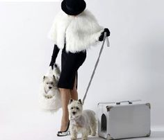 Jet setters!  And that's my dog!!