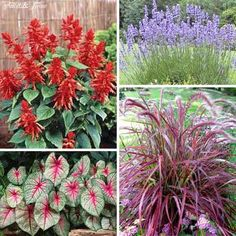 These are examples of good flowers for Height in the Center. The Simple Formula for a Beautiful Container Garden