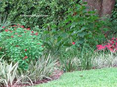 Pentas, oak leaf hydrangea, caladium...