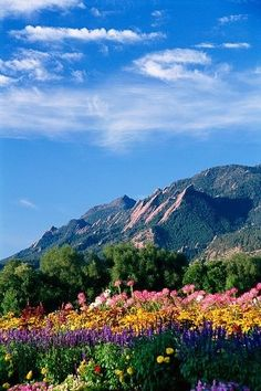 Flatirons and Flowers, Boulder, Colorado. Her favorite thing about living in Colorado. Living In Colorado, State Of Colorado, Colorado Homes, Boulder Colorado, Colorado Mountains, Rocky Mountains, Oh The Places You'll Go, Places To Visit, Belle Photo
