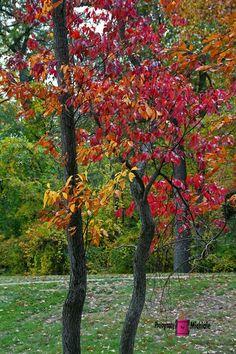 Brazen Love #photography #card #print #canvas #nature #autumn #Fall #foliage #tree #leaves