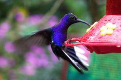 hummingbird photography tips