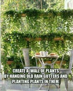 Gutter reuse: wall of plants