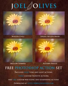 Free Color, Light and Workflow Photoshop Actions Photography Software, Free Photography, Photoshop Photography, Photography Tutorials, Photography Business, Free Photoshop, Photoshop Tutorial, Photoshop Elements Actions, Look At This Photograph