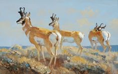 Bob Kuhn,  Buck (2007), oil on board, 8x12