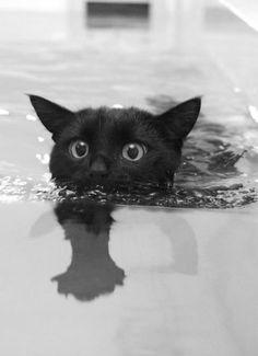 泳いでます!