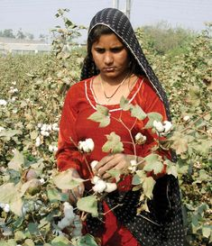 Colors of Pakistan ,agriculture woman worker working in rural areas of Pakistan Pakistan Country, Village Photography, Village Girl, Hindi Actress, Pakistani, Desi, Christmas Sweaters, Actresses, Indian