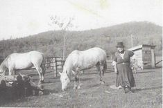 Upload Photos Horses, Photos, Animals, Pictures, Animales, Animaux, Animal, Animais, Horse