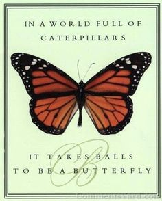 In a world full of caterpillars. It takes balls to be a butterfly.