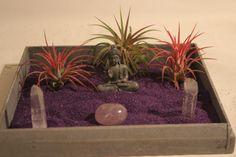 Zen Garden & Tillandsia's