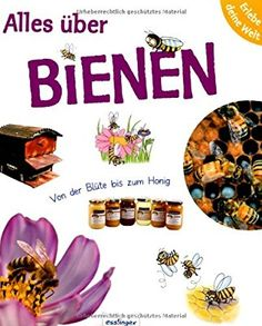 Erlebe deine Welt: Alles über Bienen: Von der Blüte bis zum Honig: Amazon.de: Sophie Lebot, Pascale Hédelin, Anne Brauner: Bücher Bee, School, Movie Posters, Babys, Bumble Bees, Insects, World Of Books, Honey Bees, Ideas For Projects