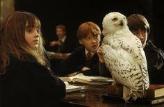 #Hedwig