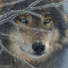 Beautiful eyes.