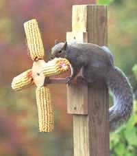 Funny and amusing squirrel feeders for corn on the cob, peanuts and wildlife mix. Feed the squirrels and distract them from bird feeders! Squirrel Feeder Diy, Bird Feeders, Garden Structures, Hedgehogs, Squirrels, Wild Birds, Cob, Bird Houses, Wildlife