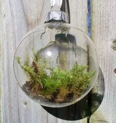 Moss in ornament.