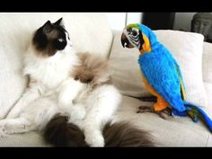 Watch This Hilarious Video Of Parrots Annoying Cats. The Dinner Bowl Standoff At 1:58 Is Priceless.
