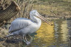 Pelikan Traube by Michael Rossner on 500px