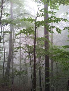 안개 낀 숲길