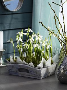 blumen-arrangement holzkiste schneeglöckchen deko ideen Tips For Decorating With a Floral Pattern It Spring Flower Arrangements, Spring Flowers, White Flowers, Floral Arrangements, Beautiful Flowers, Spring Flowering Bulbs, Spring Bulbs, Pot Jardin, Deco Nature