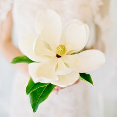 My mom and I have talked about a single magnolia blossom wedding bouquet for years. We have a magnolia tree back home. I couldn't believe it when I saw this picture!