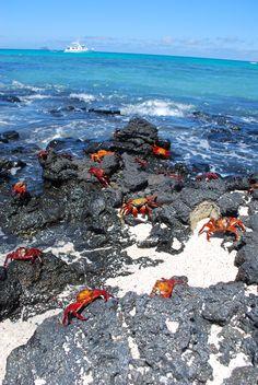 Galapagos Island crabs