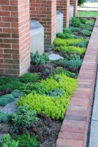 Sedum Garden Design -   Easy care Drought Proof Perennial