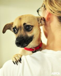 Please Urge your U.S. representative to support the Pet and Women Safety (PAWS) Act, an ASPCA-supported federal bill reintroduced in the U.S. House of Representatives on March 5. This bipartisan legislation criminalizes the intentional targeting of a domestic partner's pet with the intent to kill, injure, harass, or intimidate.
