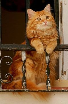 Amazing orange cat who is the Day dreamin'…..