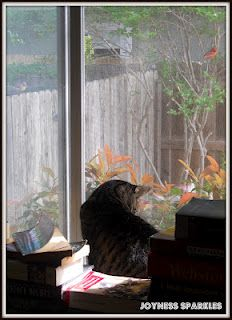 Our kitty is unable to persue her friendship with these Cardinals due to the window being in her way.