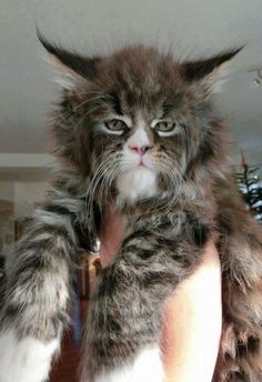 This cat looks like an old wizard.