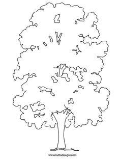 albero-castagno
