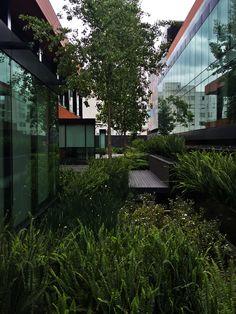 Arquitectura de paisaje en Campus Corporativo Coyoacan. DLC Arquitectos + Colonnier y Asociados. Año 2013