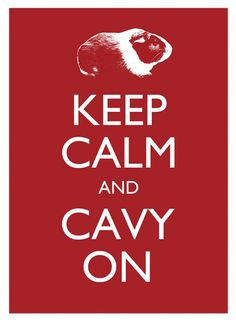 Keep Calm and Cavy On Print  Lesley DeSantis @ WGPF  http://www.etsy.com/listing/69201969/keep-calm-cavy-on-8-x-10-guinea-pig