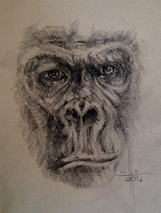 Dibujo Gorila lapiz carbón. Sobre papel natural Sennelier A4